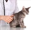 Ветеринарные клиники в Бузулуке